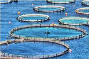 82613635 71772747 300x201 ابتلای ماهی های دجله و فرات به نوعی بیماری ویروسی، مردم مراقب باشند / کوتاهی در اجرای طرح پرورش ماهی در قفس قابل قبول نیست/لزوم تغییر نگاه آب و برق به طرح پرورش ماهی در قفس