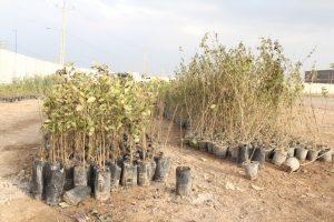 IMG 20190308 WA0052 300x200 مراسم اهداء و کاشت ۳۰هزار نهال به مناسبت روز درختکاری در مناطق کوی مهدیس و کوی اسلام آباد اهواز