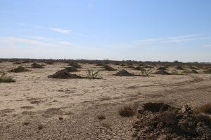 بازدید از کانون های ریزگرد 24 دی 96 5 300x200 نگهداری از نهال های کاشته شده در کانون های ریزگرد/ مهار کانون فوق بحرانی ریزگرد در خوزستان امسال باید به اتمام برسد