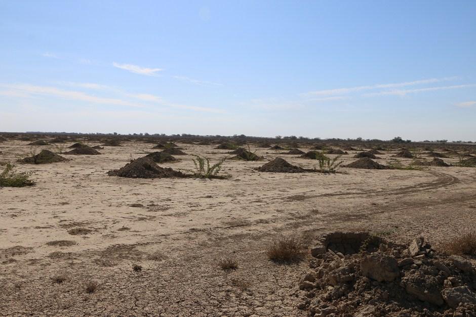 بازدید از کانون های ریزگرد 24 دی 96 5 نگهداری از نهال های کاشته شده در کانون های ریزگرد/ مهار کانون فوق بحرانی ریزگرد در خوزستان امسال باید به اتمام برسد