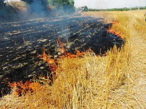 n83030439 72542213 300x225 آتش زدن بقایای مزارع به تنوع زیستی در خوزستان آسیب می زند