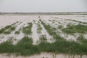 n83278488 72964076 300x200 وقوع 3 مرتبه سیل در یک سال زراعی در خوزستان