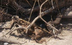 156373534 300x188 یک جنازه در بیشه عباس آباد دزفول کشف شد + تصویر