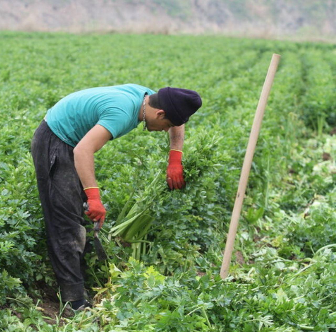IMG 20191217 225255 898 سالی پربار برای کشاورزان خوزستان با بارشهای پاییزی