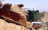 1776736 160x100 نرخ خرید تضمینی گندم در خوزستان اعلام شد