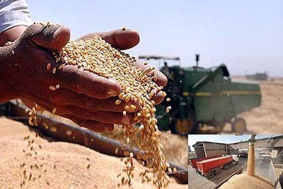 1776736 نرخ خرید تضمینی گندم در خوزستان اعلام شد
