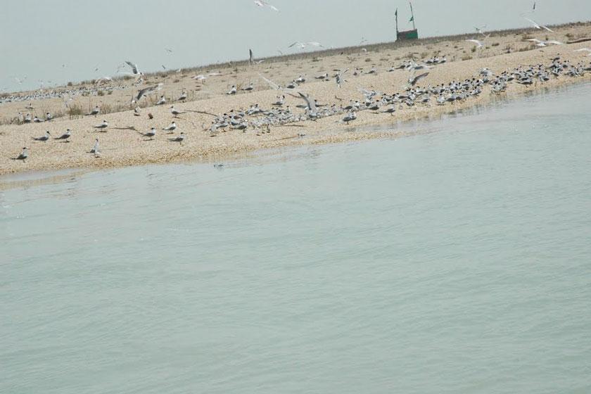 8698496d 32f0 45a8 a66b 7c7d9577d0dc ثبت یک میراث طبیعی از خوزستان در فهرست آثار ملی