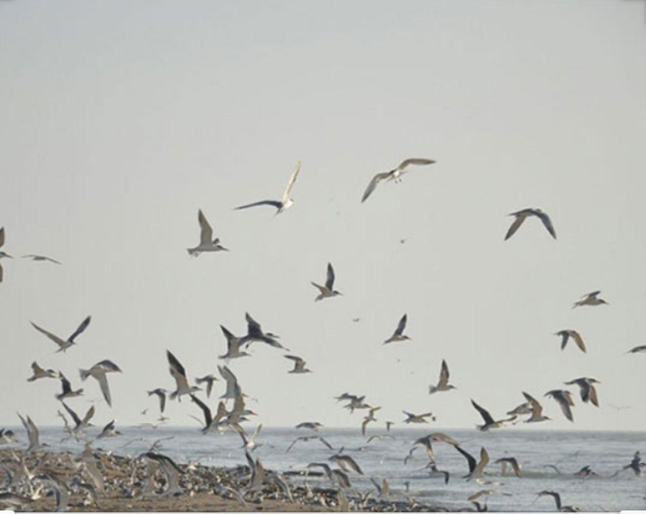 IMG 20200415 205643 043 ثبت یک میراث طبیعی از خوزستان در فهرست آثار ملی