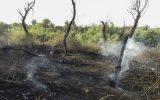 IMG 20200529 155255 742 160x100 جنگل خسرج از محاصره آتش خارج شد