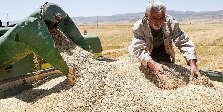IMG 20210509 174201 968 1 خرید تضمینی نزدیک به 1 میلیون تن گندم در خوزستان/ مطالبات کشاورزان پرداخت شد