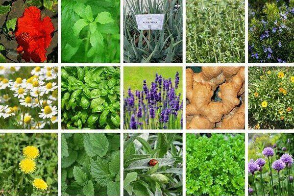 IMG 20211011 155344 046 کلینیک مرجع گیاهپزشکی در دانشگاه چمران اهواز راه اندازی شد